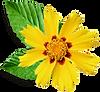 Pequena Flor amarela