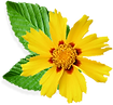 Flor amarilla pequeña
