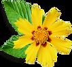 dibujo Flor amarilla pequeña