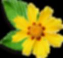 Маленький желтый цветок
