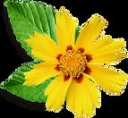 Lite gul blomma