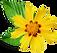 Little Yellow Flower