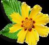 Petite fleur jaune - Empreintes - La Motte-Servolex