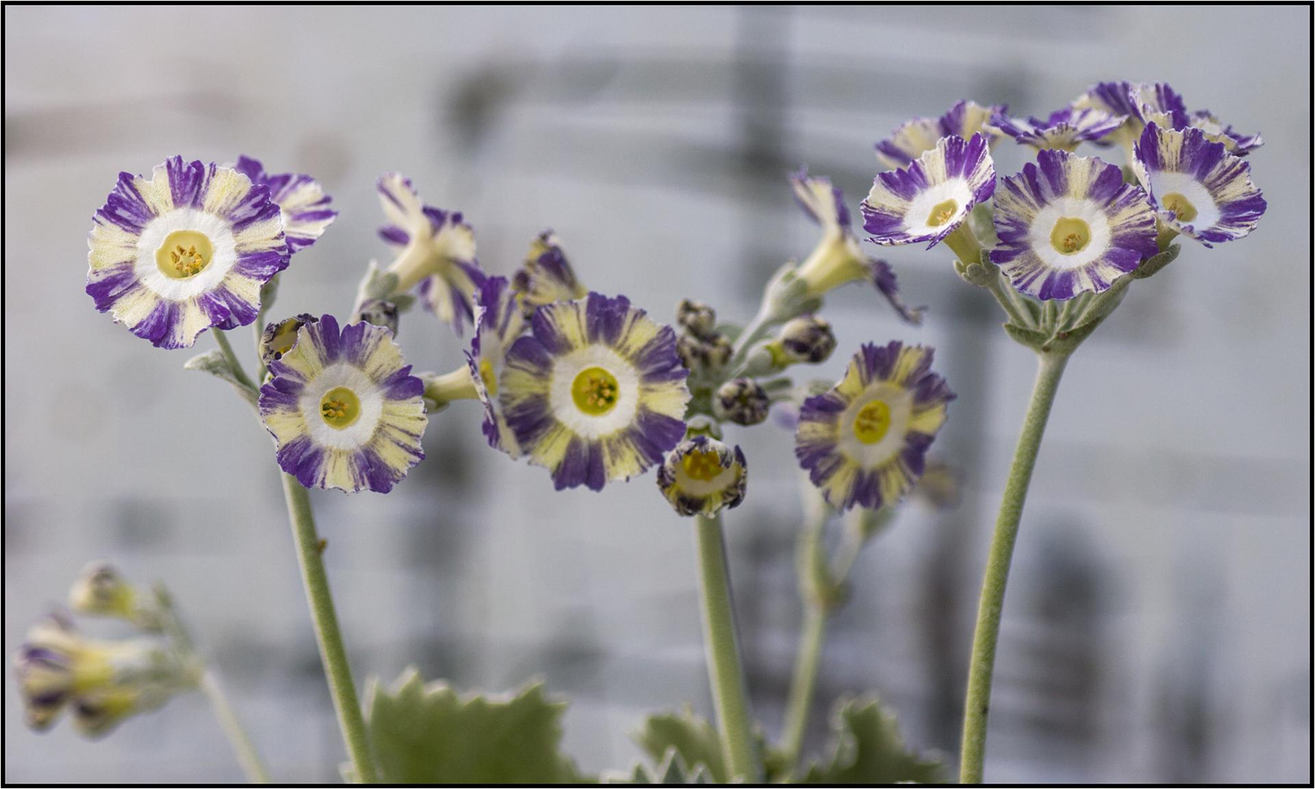 NA seedling_5