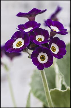 NA seedling_8