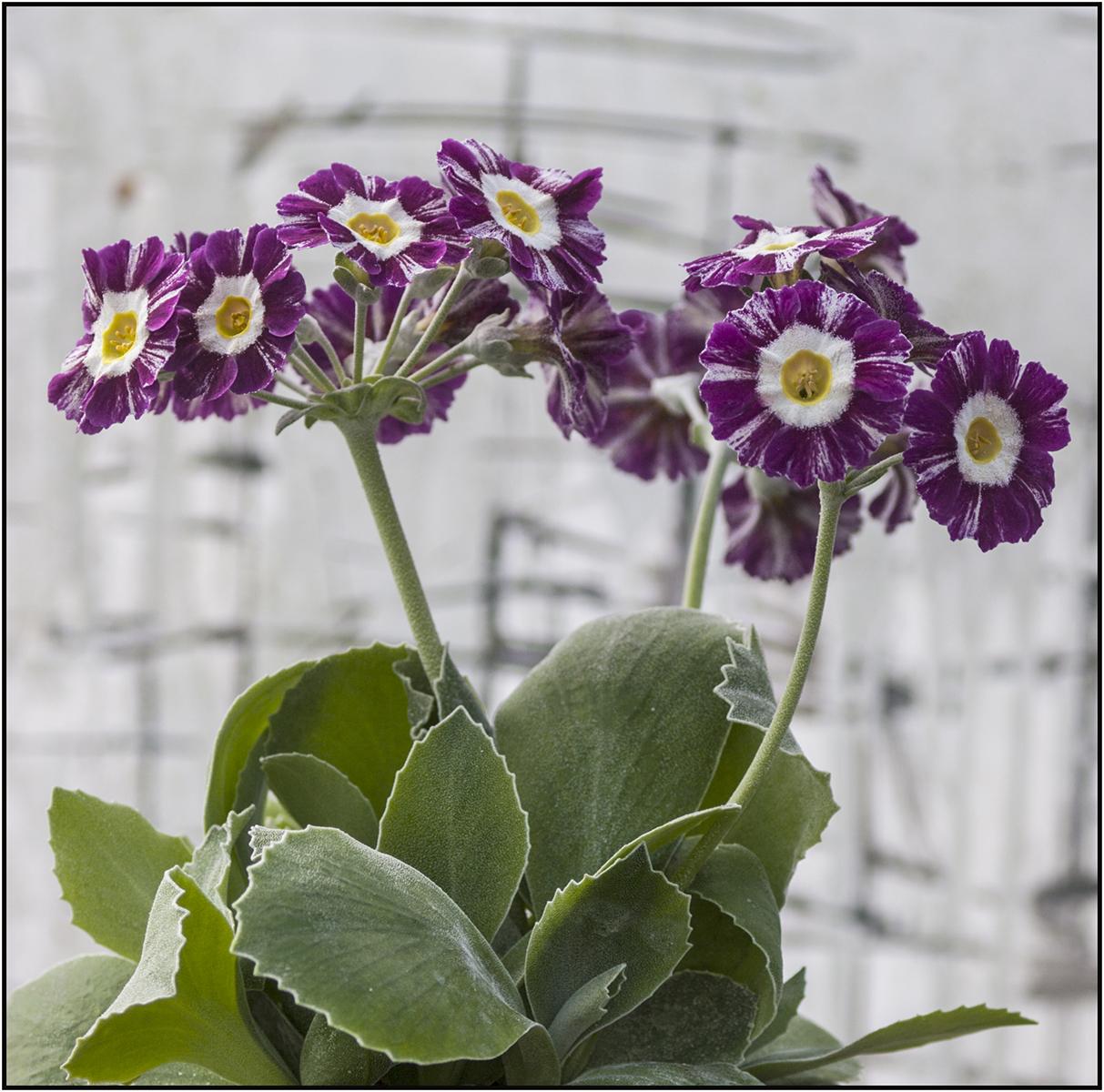 NA seedling_4