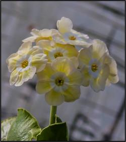 NA seedling_9