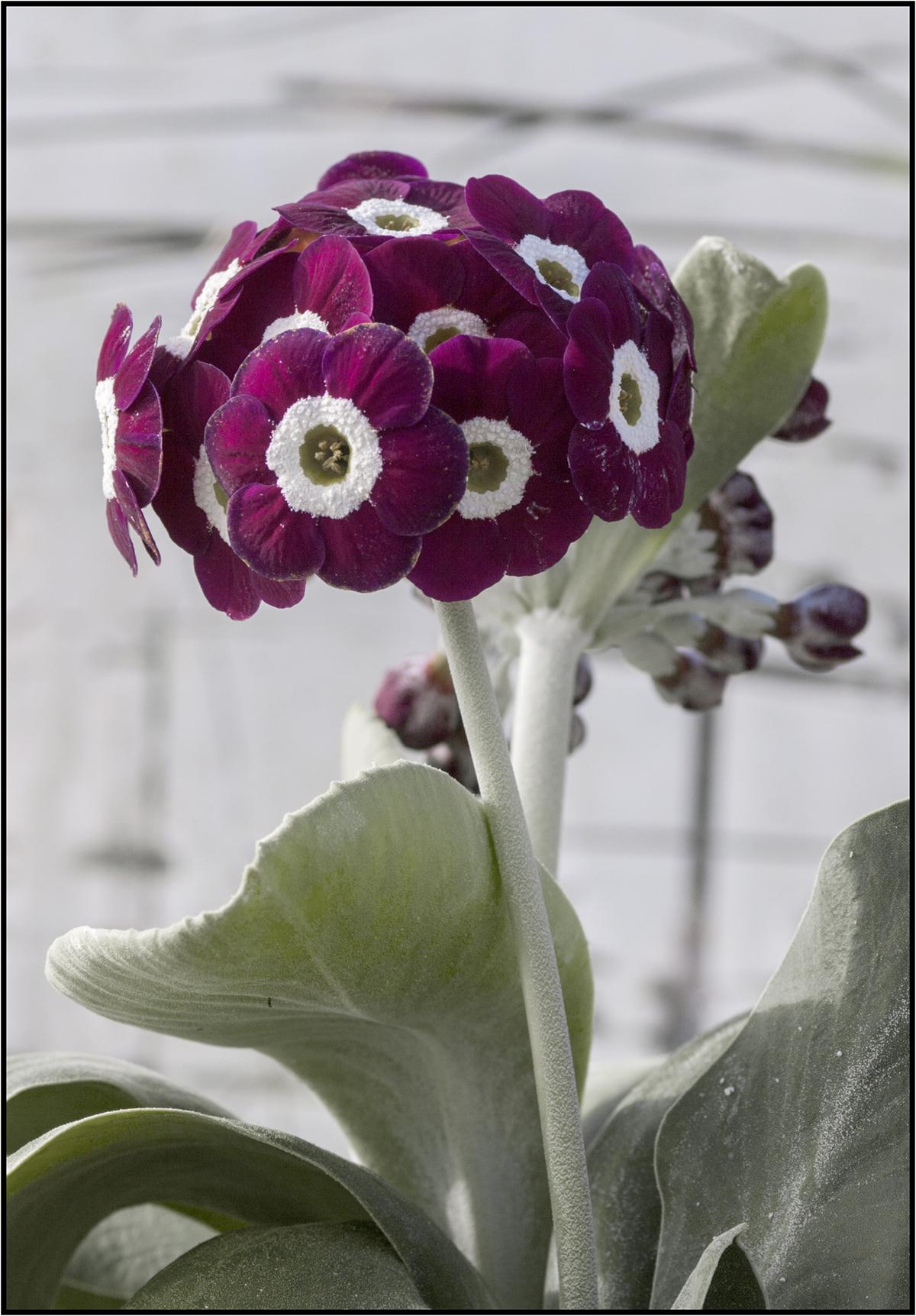 NA seedling_6