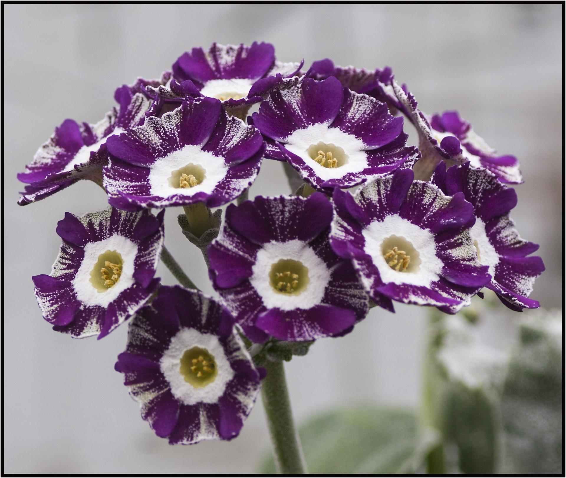 NA seedling_7