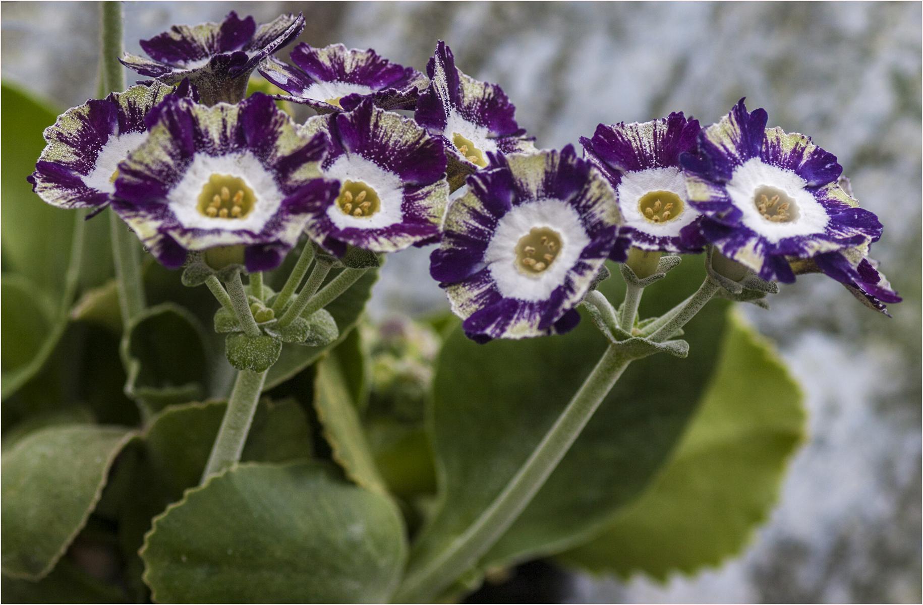 NA seedling_1