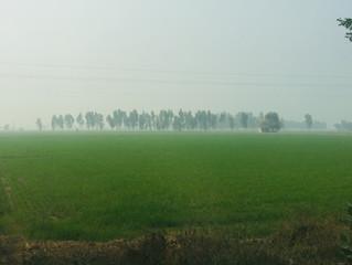 At Hussainiwala, Ferozepur