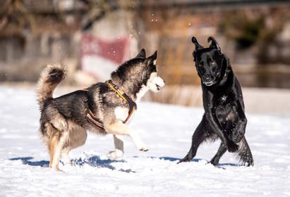 hund-8729.jpg