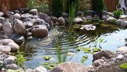 Back yard fish pond