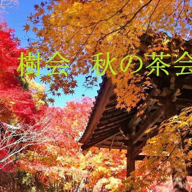 樹会 秋の茶会 11月
