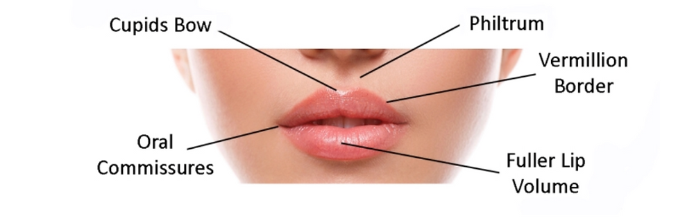 Areas of the lips