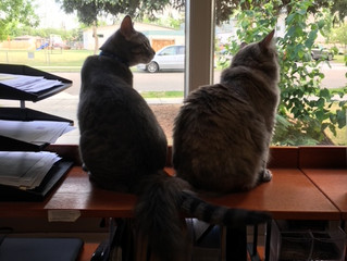 UC Observer Magazine - Meet Mouse and Mabel