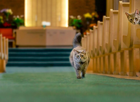 These Edmonton church cats bring all the snuggles... unless you're a mouse