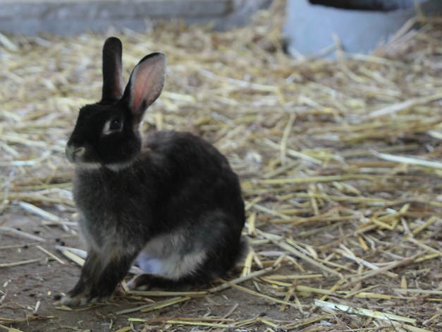 Rabbit Care  -  Santa Barbara Pet Sitters