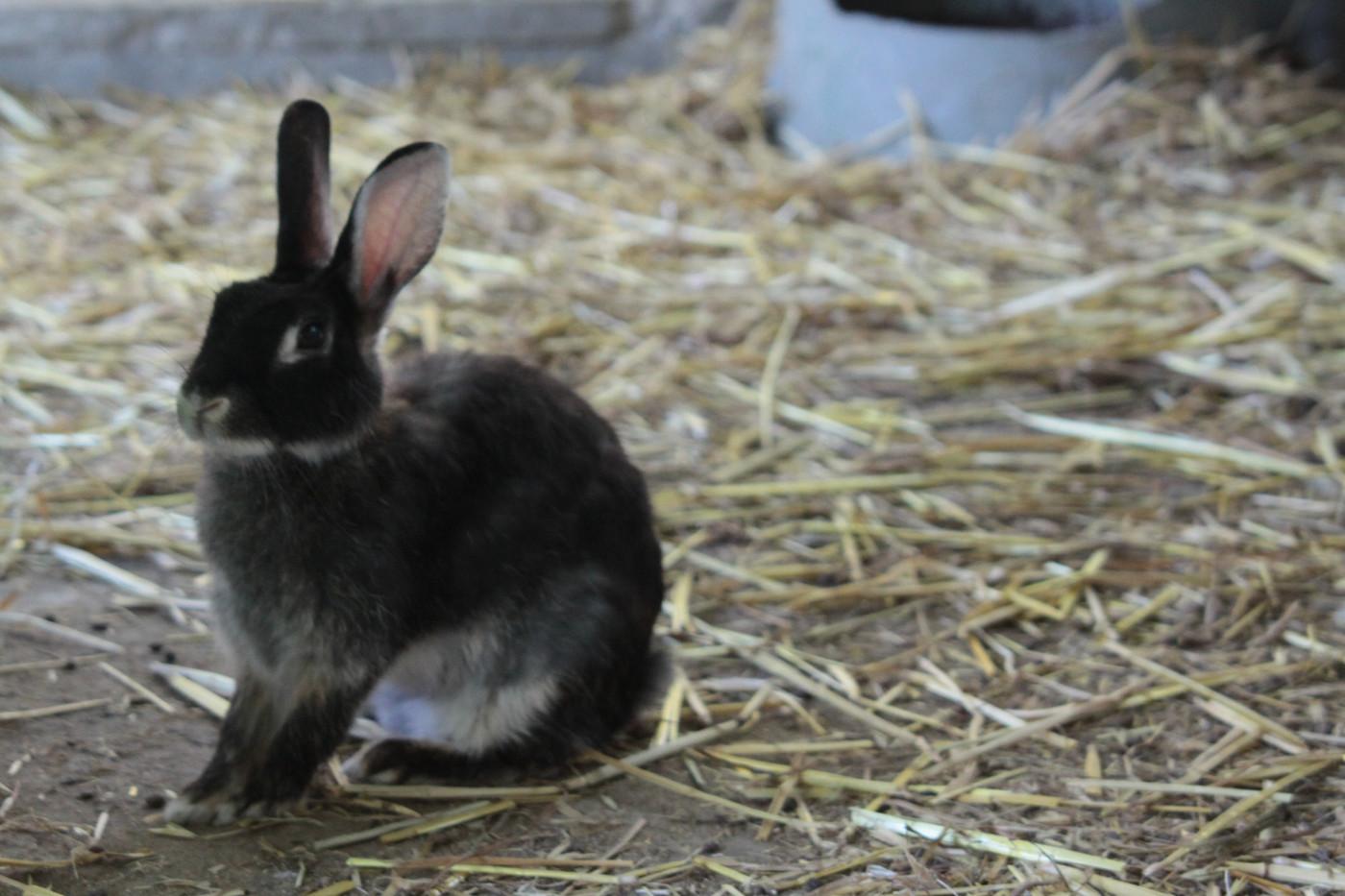 Azienda agricola coniglio - Agriturismo
