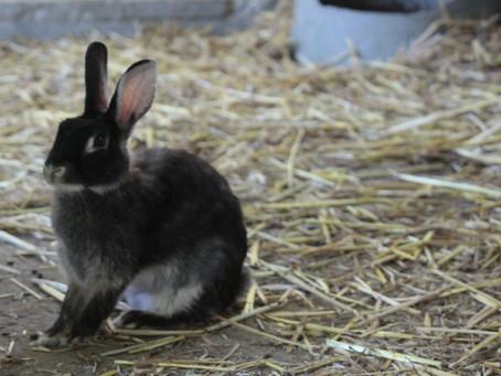 ウサギがまさかの・・動物たちの危機管理