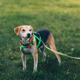 doggy walk walk.jpg