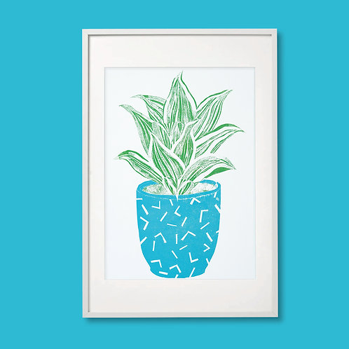 No Watering Required: Unspecified House Plant