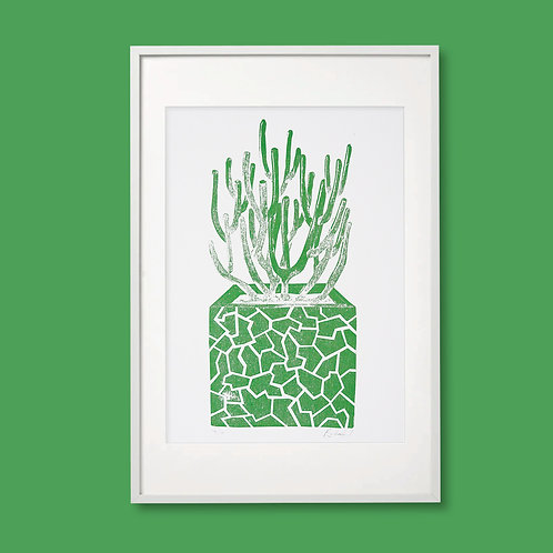 No Watering Required: Succulent
