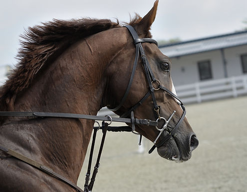 RATED– 3 Day Dressage Show