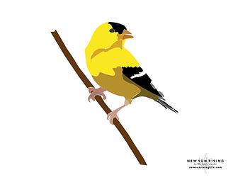 Goldfinch Watermark.png
