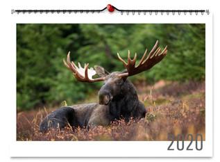 kalendar_nastenny_sirka_1000x1000.jpg