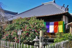 椿 寺 (地蔵院)