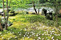 沙羅双樹の寺(東林院)
