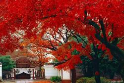 血天井・宗達寺 (養源院)