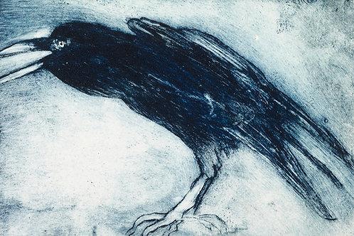 Nikki Braunton - Crow