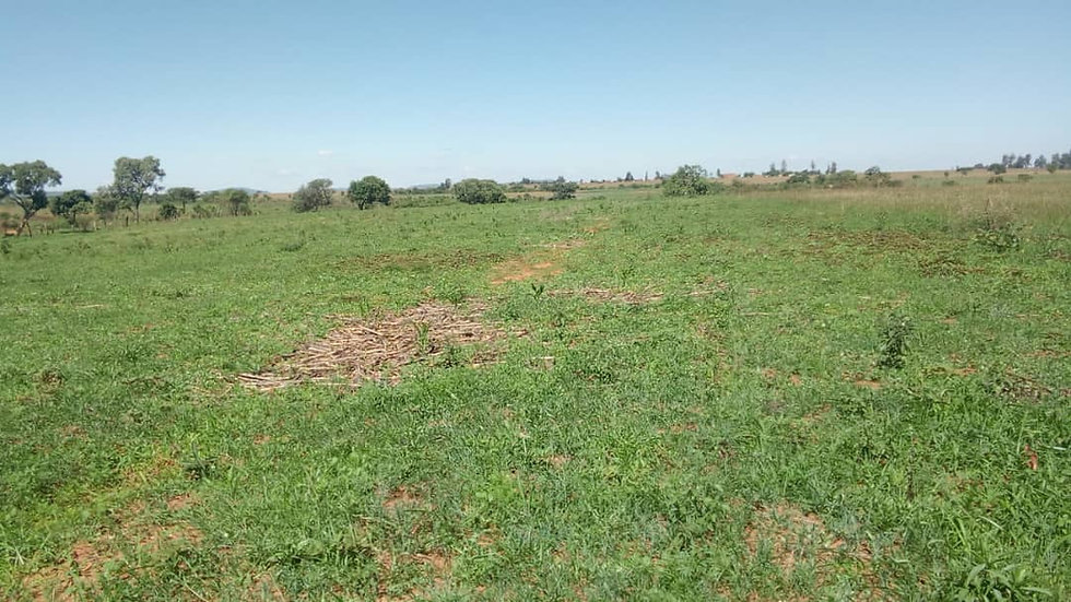 Glendale Plot (5ha available: Arable)
