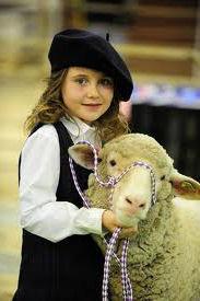 lil girl sheep lead.jpg
