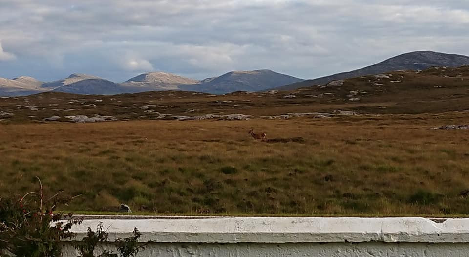 deer and mountains from the front bench