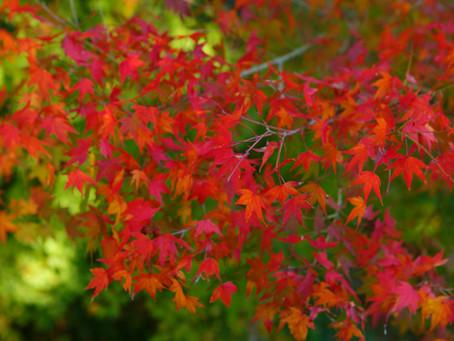 秋のプロモーションビデオ撮影