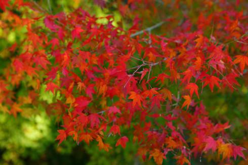 紅葉の時期