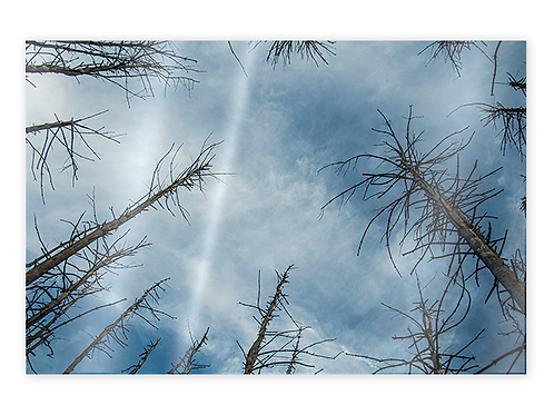 Trees and Clouds Greeting Card