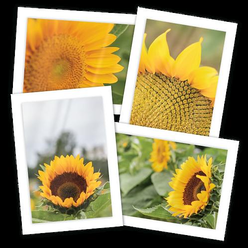 Sunflower Greeting Card Quartet