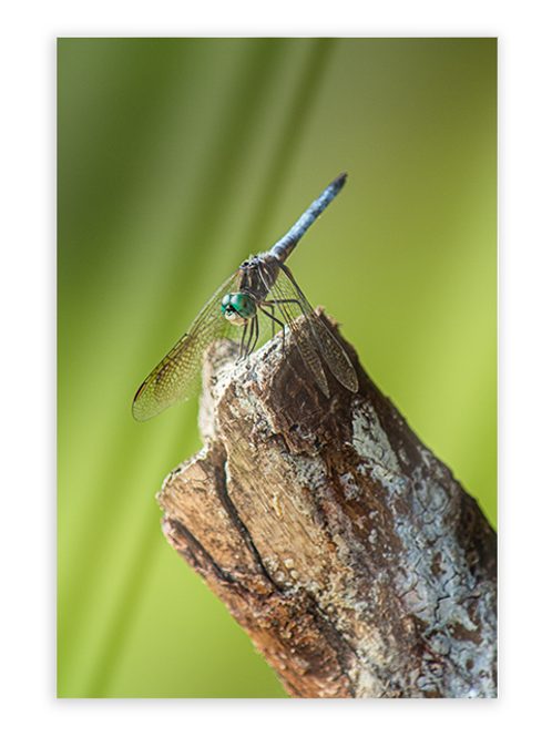 Dragonfly Greeting Card #3