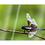 Thumbnail: Dragonfly Greeting Card Trio