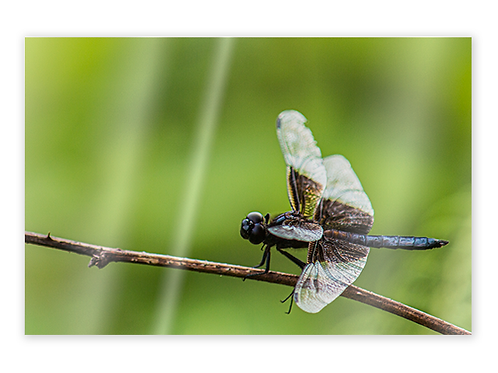 Dragonfly Greeting Card #2
