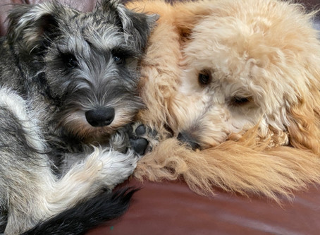 Coping With Your Dog At Home During The Pandemic