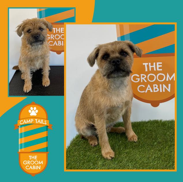 Groom Cabin Border Terrier
