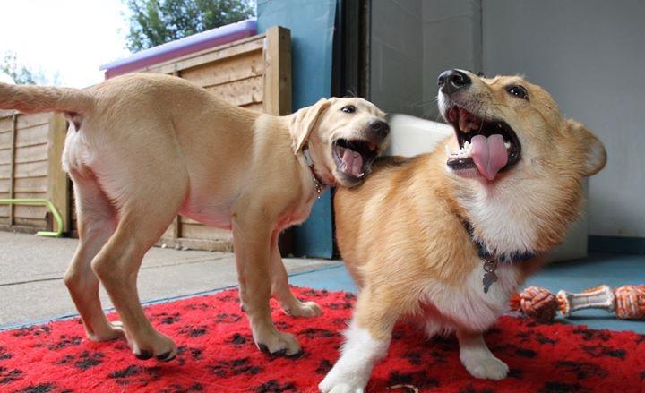 Puppy fun!