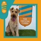 Groom Cabin Irish Terrier