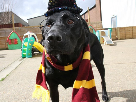Dogwarts at Camp!