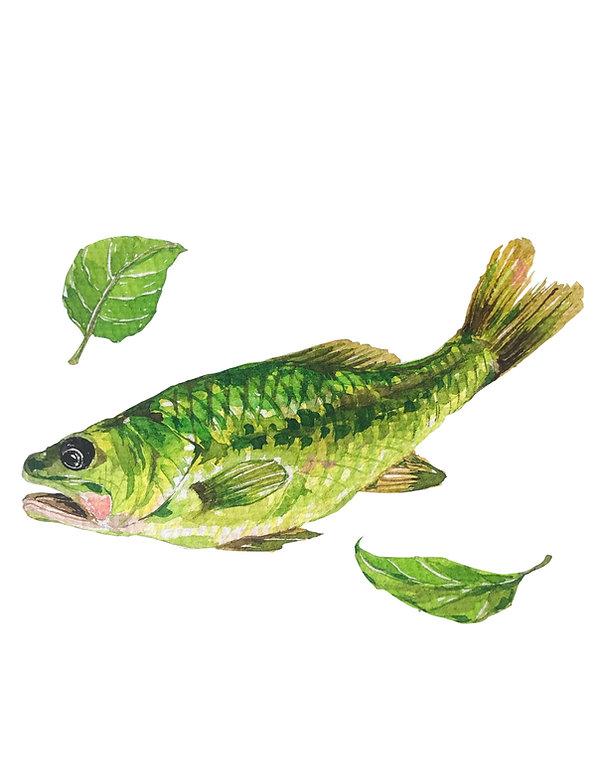 Bass_leaf.jpg
